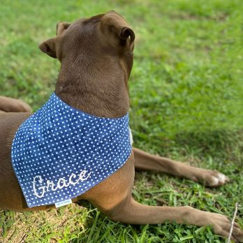 Blue Jean Dots Pet, Dog, Cat, Pig, Goat, Bandana