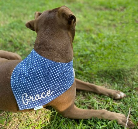 Blue Jean Dots Pet, Dog, Cat, Pig, Goat, Bandana