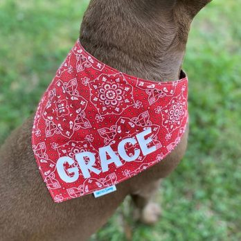 Red Paisley Pet Dog Bandana