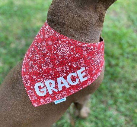 Red Paisley Pet Dog Bandana