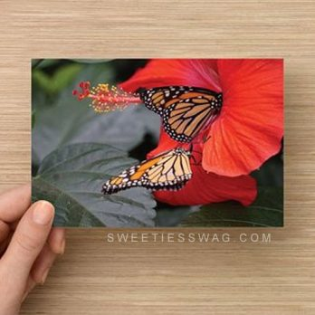 "4 x 6"" Postcards for Entering Mail-in Sweepstakes - Monarch Butterflies"