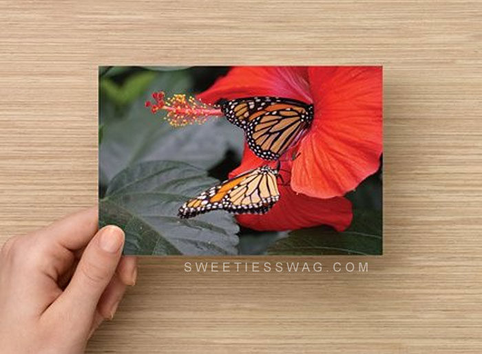 butterfly-postcards-front