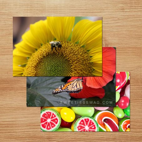 Choose 25 of the current designs I have in stock to make a multi-pack of 50 postcards.